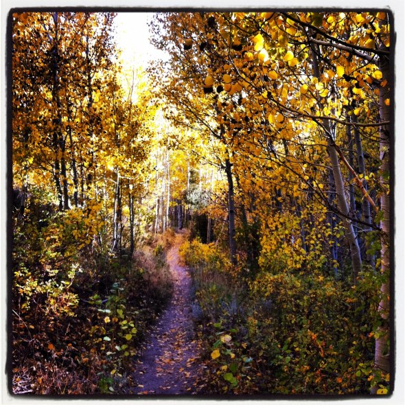 Tasty singletrack and fall colors in an aspen grove on the first section