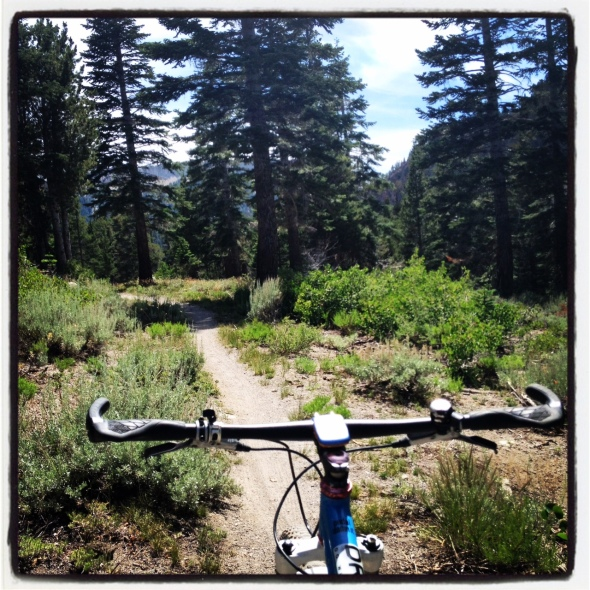 Some sweet singletrack on the Panorama Dome MTB Trail