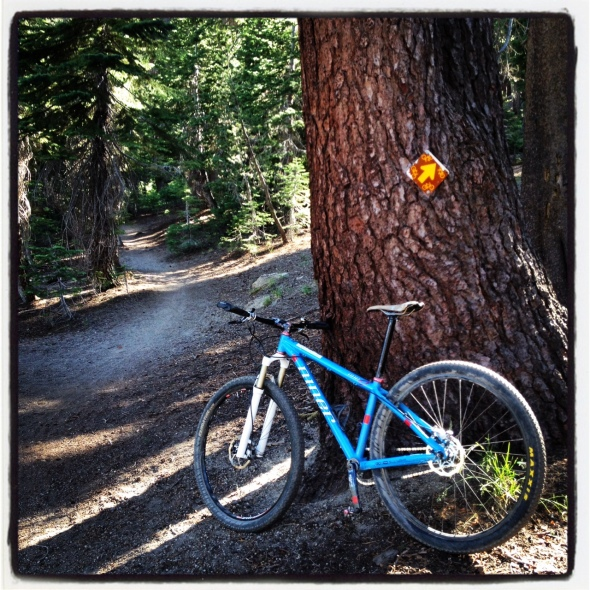 A USFS bike trail sign and a fun slice of singletrack through the trees