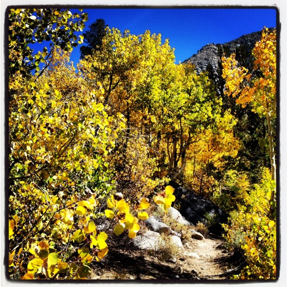 Fall colors on the climb up to Sand Canyon Trail