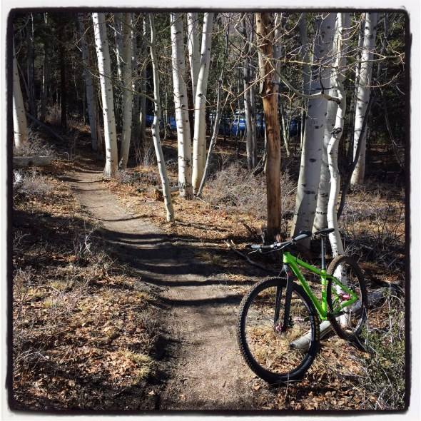 A fun, twisty section through a small aspen grove.